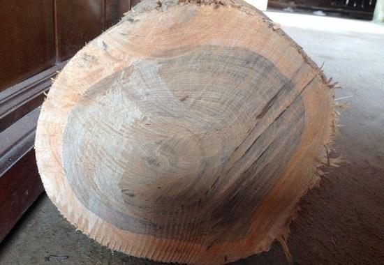 Cây gỗ bách xanh, gỗ bách xanh có tốt không, thuộc nhóm mấy, cách ...